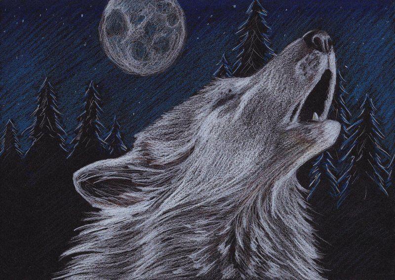 картинка волк рисунка луна относился